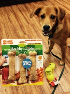 Nola and I picked out some fun treats and toys at PetCo in Union Square on Saturday.