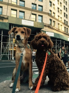 Nola and Lionel spent the weekend with me, and we traversed the city. This was their best impression of dog statues. I don't know what they were looking at, but it had their attention!